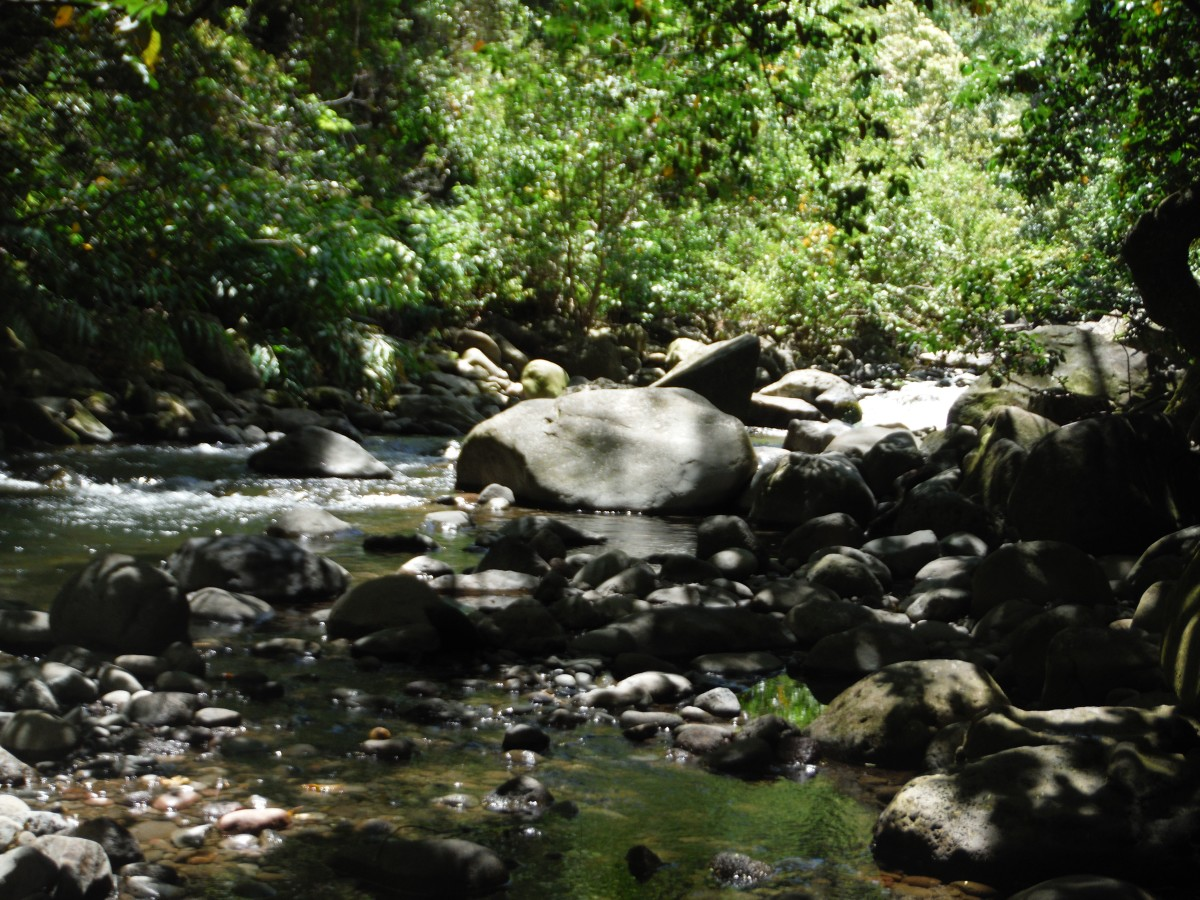 Sit along the gentle flowing Iao River.
