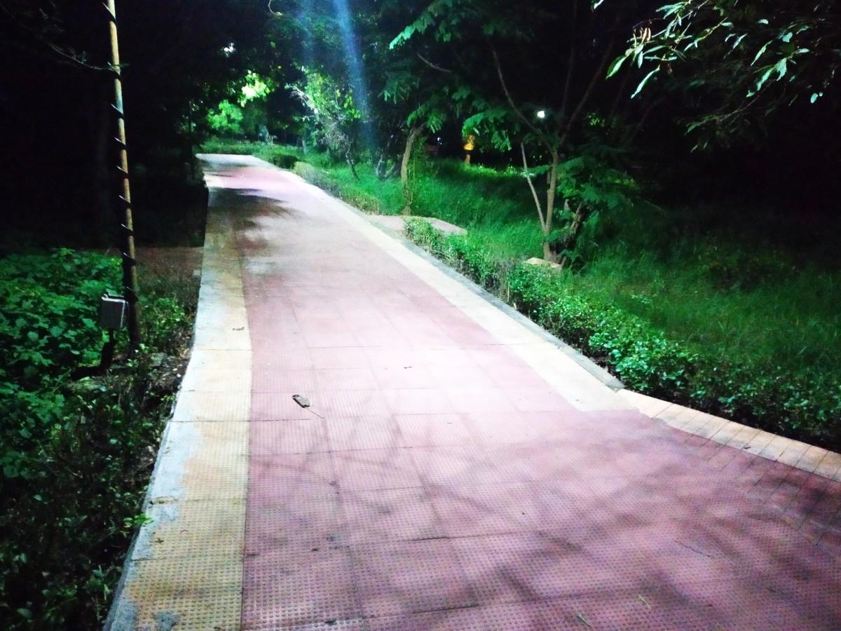 Kotturpuram Tree Park at night