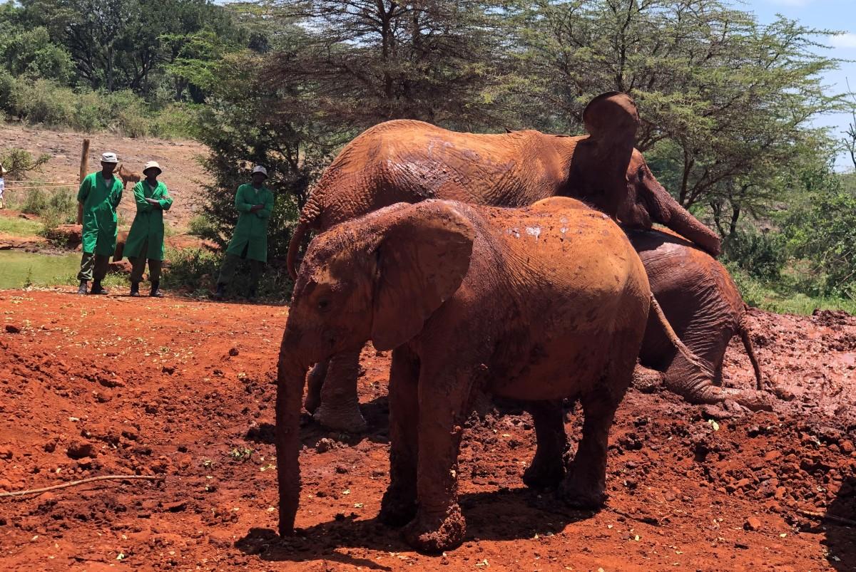 SWT Elephant Orphanage