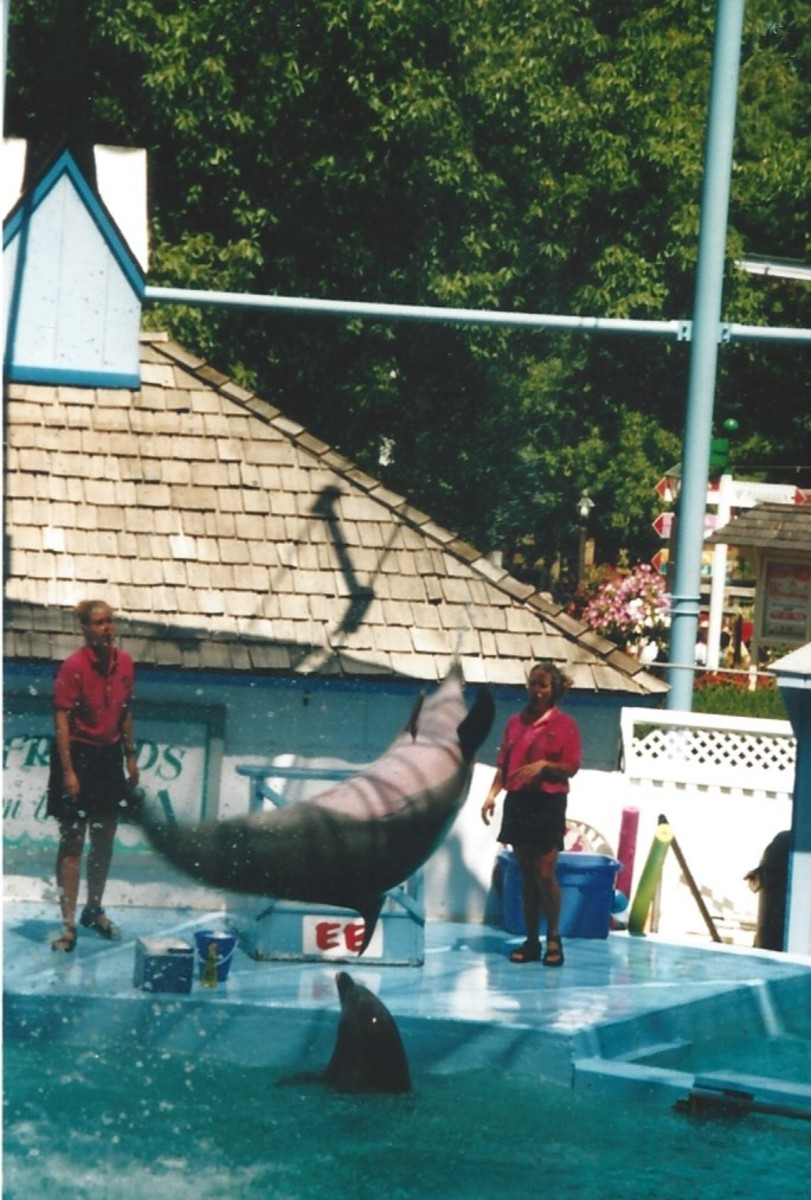 A dolphin show at Hershey Park