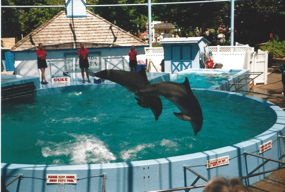 Dolphins performing at Hershey Park.