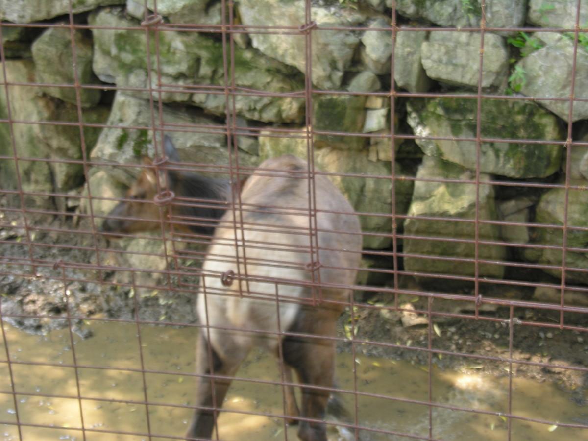 ZooAmerica, August 2011