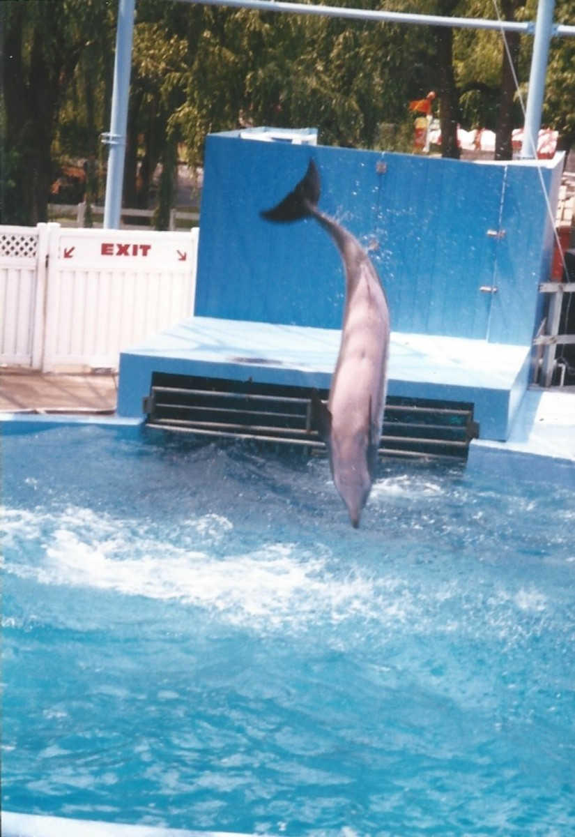 A dolphin at Hershey Park