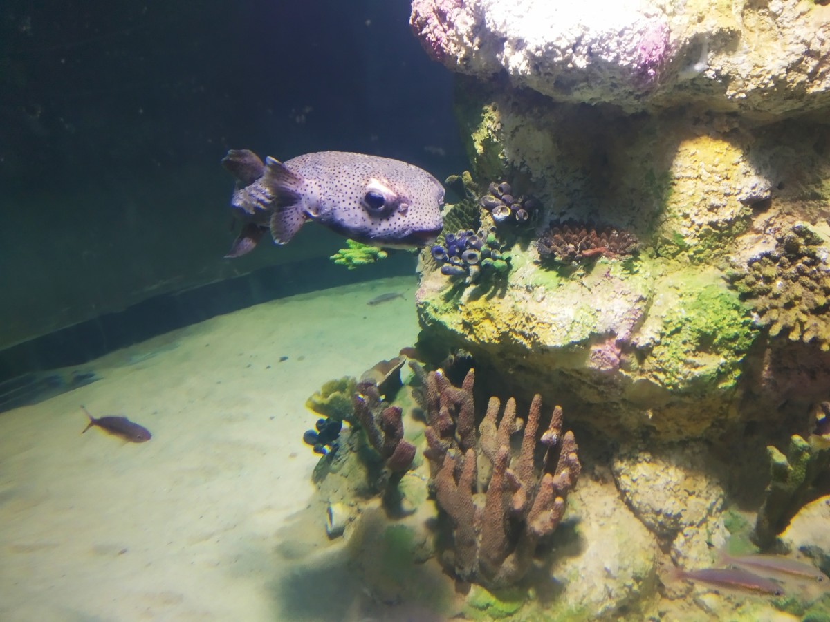 Can someone help with the name of this alien fish?