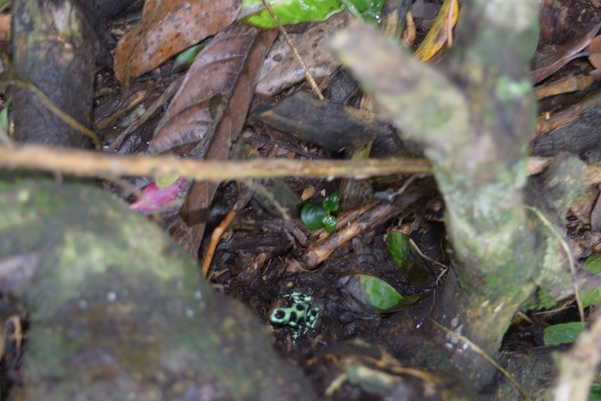 Nature is all around you, like this small frog spotted on our journey.