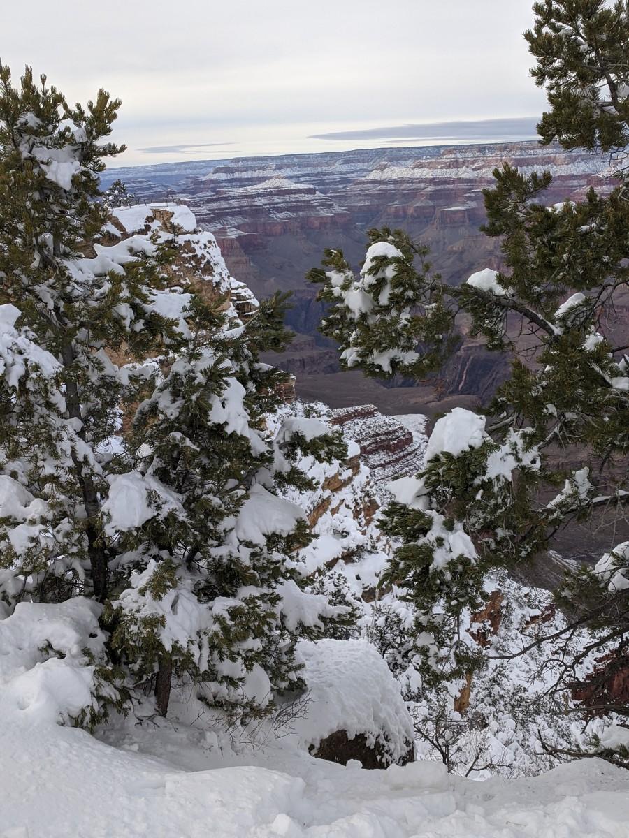 Looking at Grand Canyon Through Trees along South Rim of Grand Canyon