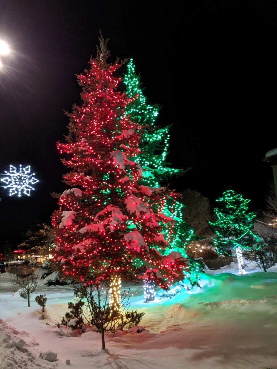 Christmas Trees Along Main Road in Tusayan, AZ