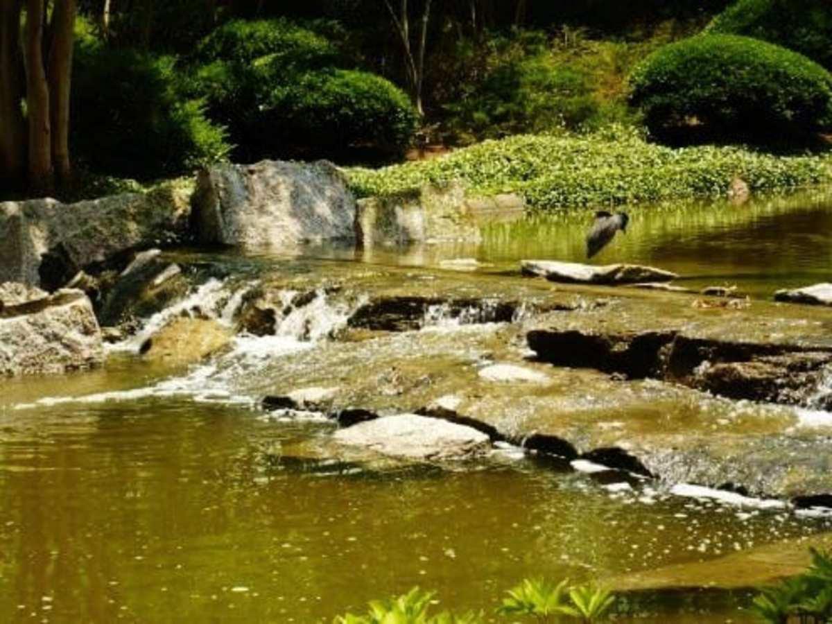 Water sounds in Hermann Park Japanese Garden