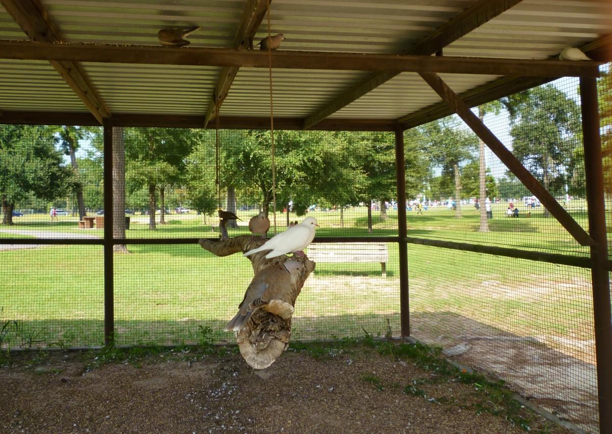 Aviary in Meyer Park
