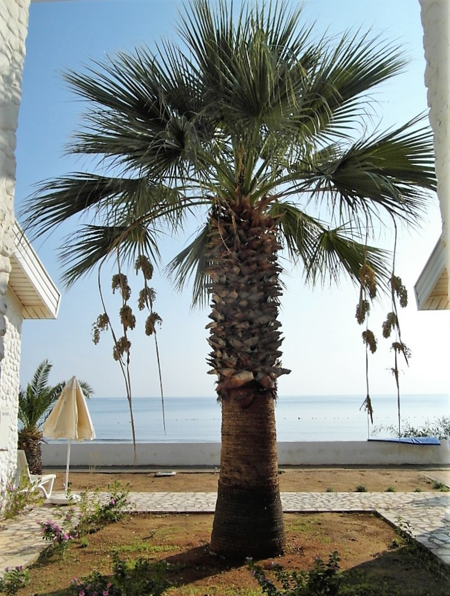 The palm tree by our mini villa.