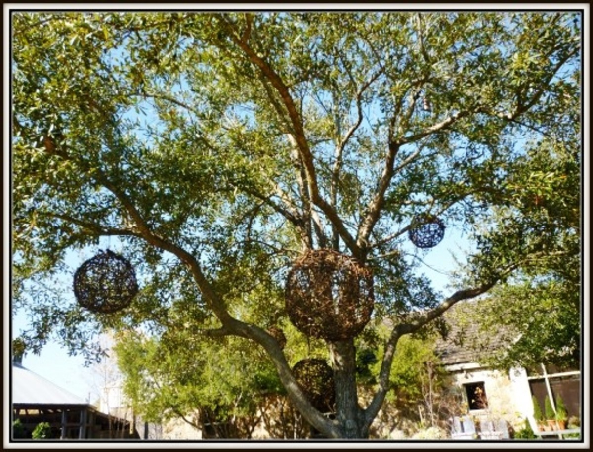 Grapevine balls hanging from trees at Tiny Boxwoods