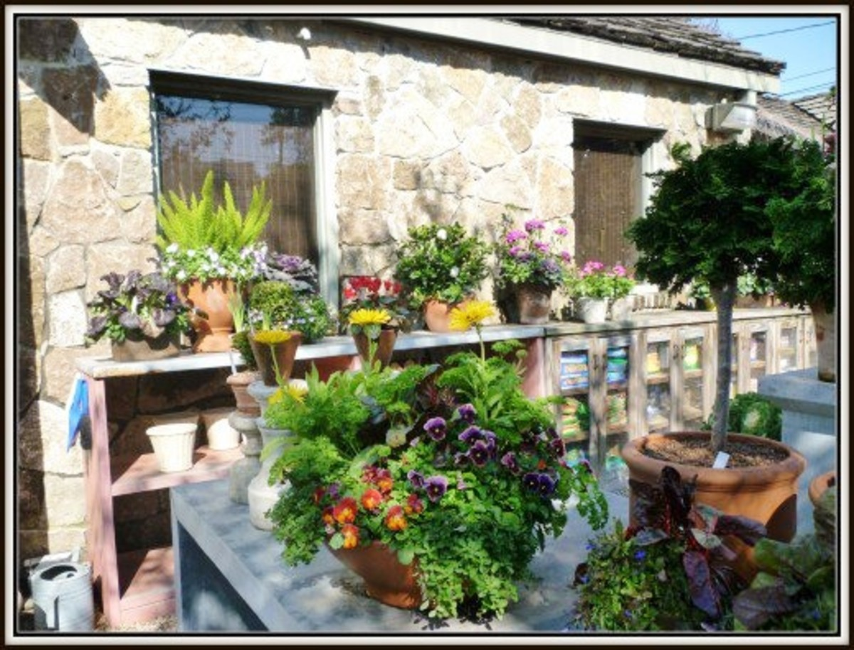 Potted plants for sale at Tiny Boxwoods location