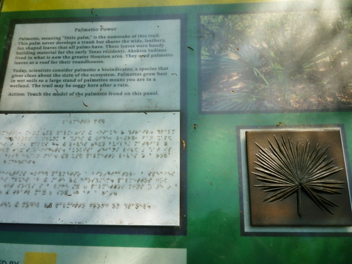 Palmetto info including braille at the Houston Arboretum