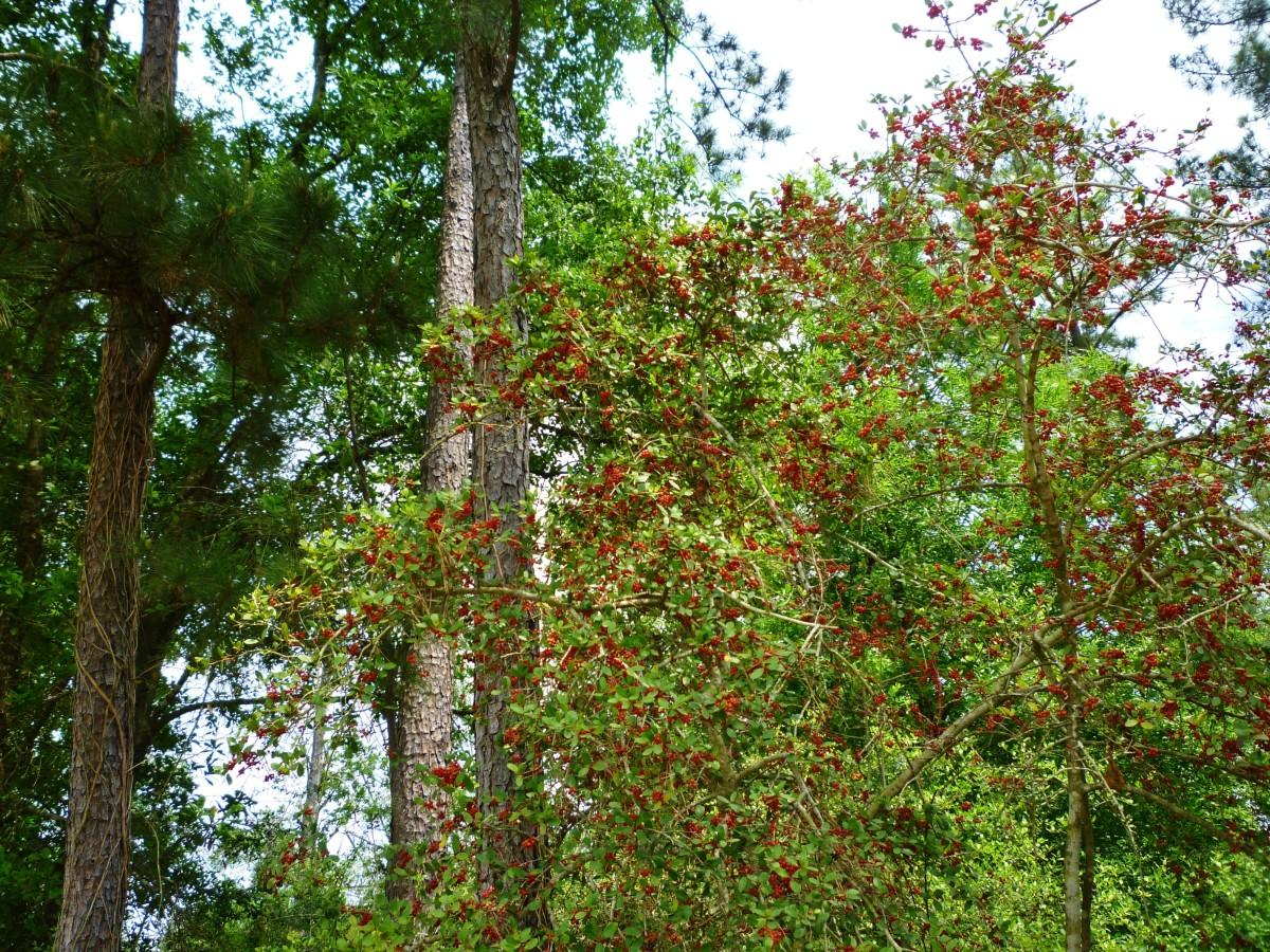 Scenery at the Houston Arboretum