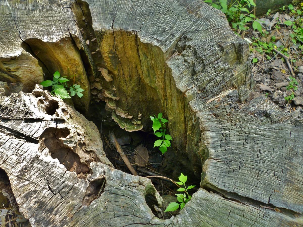 Fungi growing inside of a tree stump at the Houston Arboretum