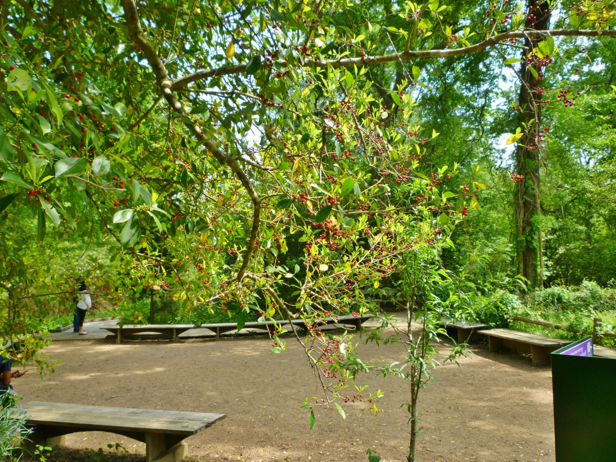 Outdoor classroom at the Houston Arboretum