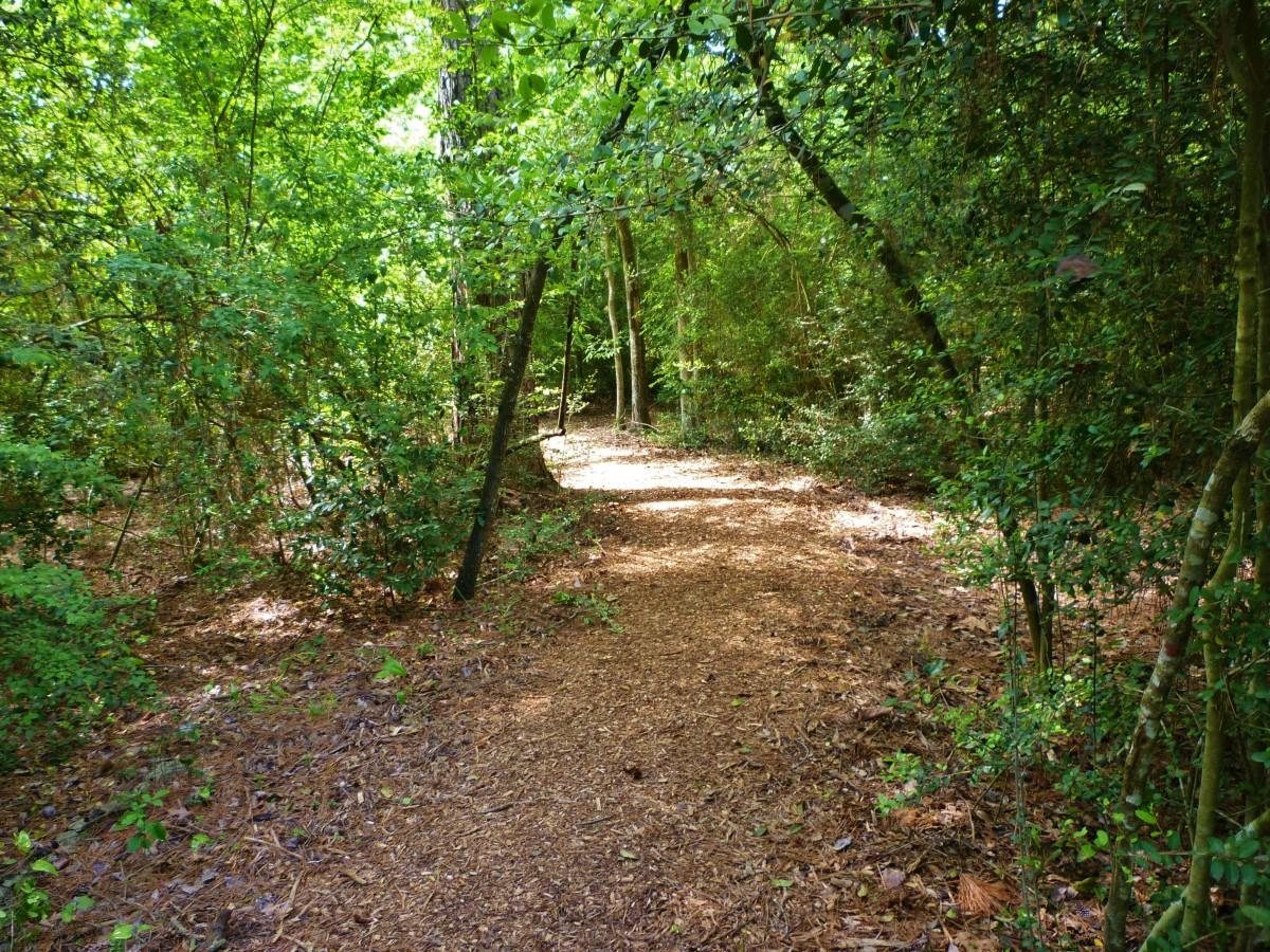 Houston Arboretum path through a wooded area