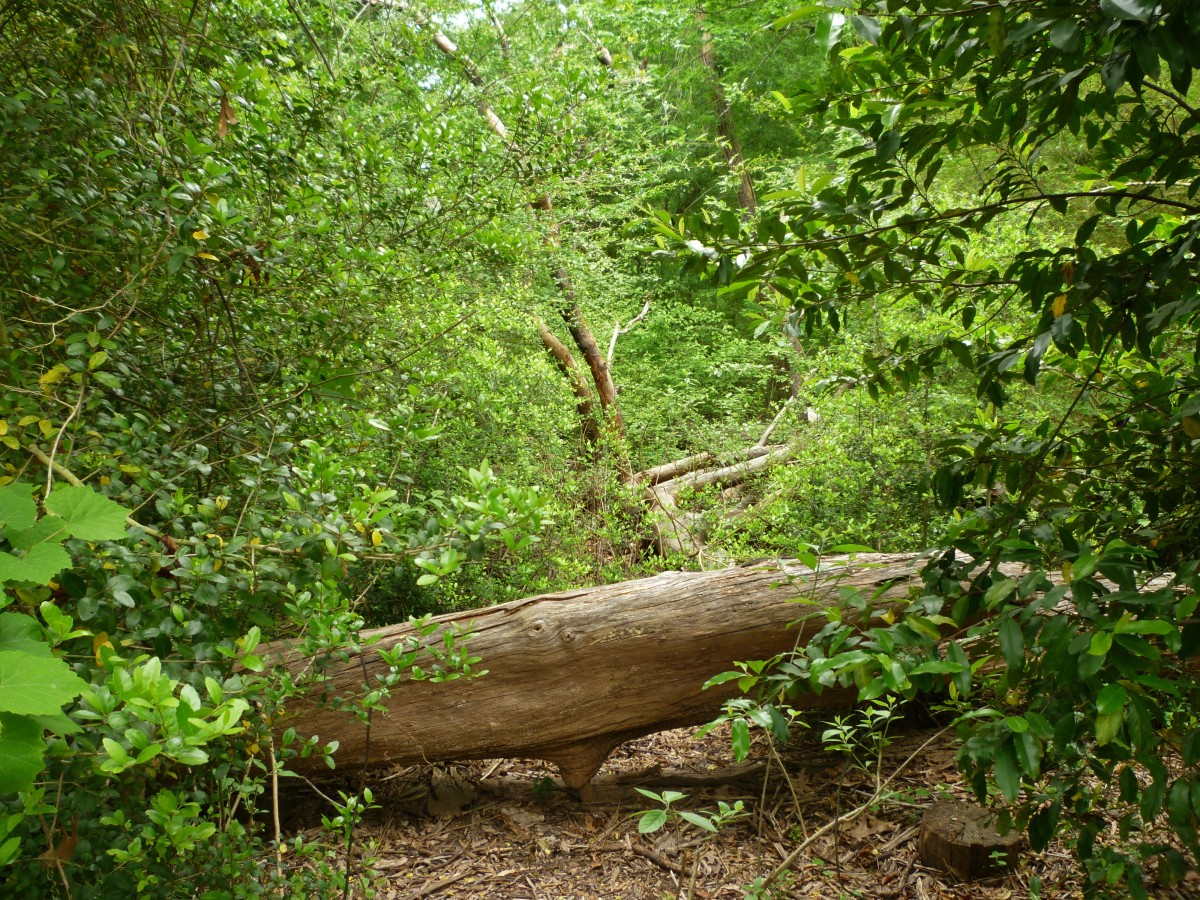 Fallen trees are left to decompose