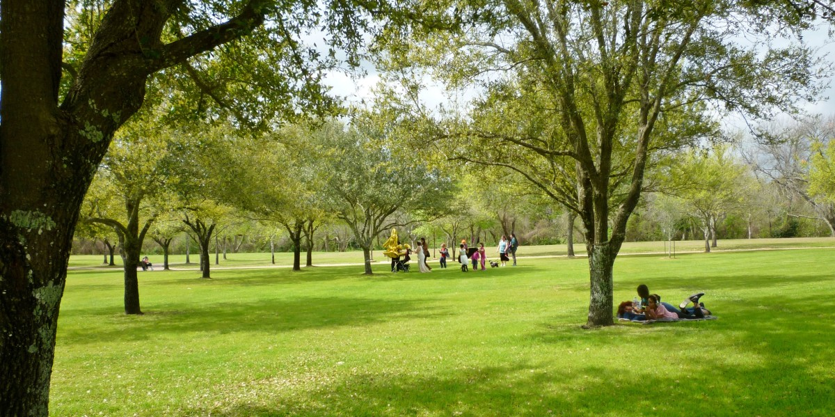Lawn spaces in the park