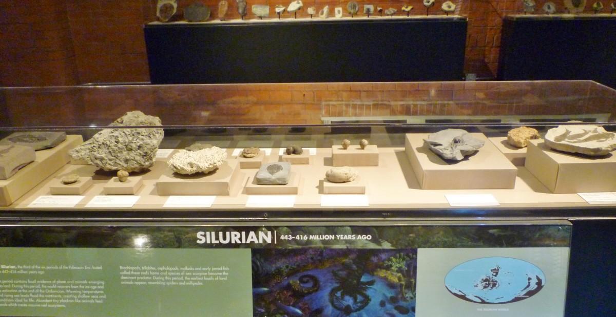 Many fossils at HMNS Sugar Land