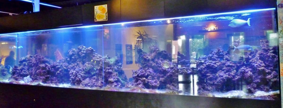 Large 2,000 gallon saltwater aquarium