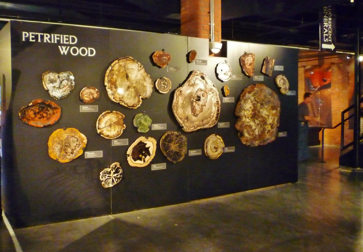 Petrified wood examples