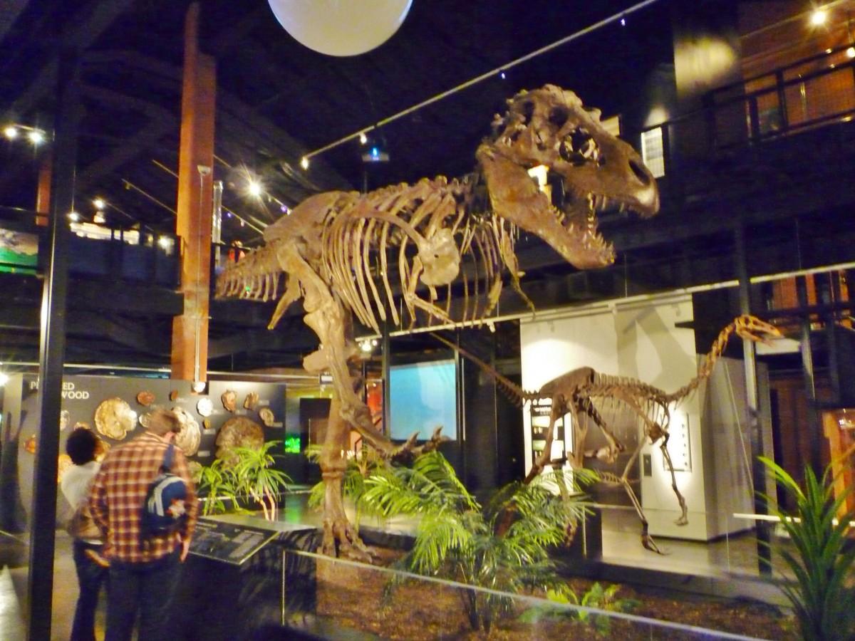 Tyrannosaurus Rex & Struthiomimus Dinosaur casts at HMNS Sugar Land
