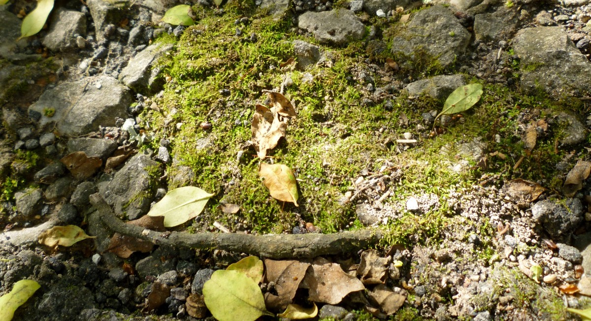 Moss, rocks, and leaves