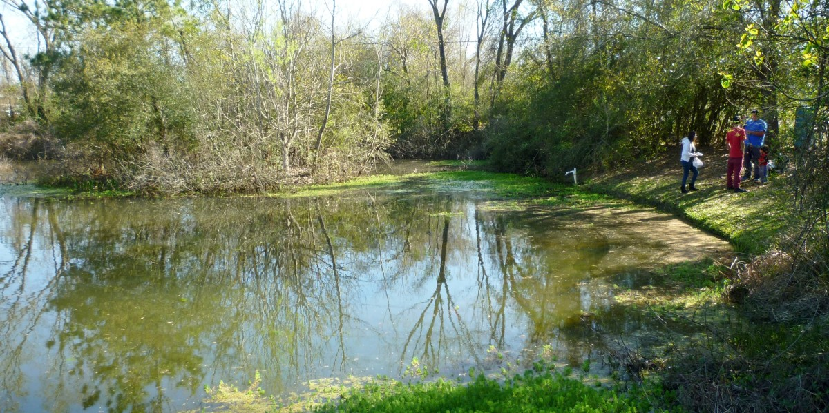 Pond in the Theis Attaway Nature Center