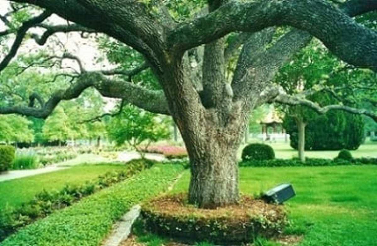 Houston Garden Center in Hermann Park