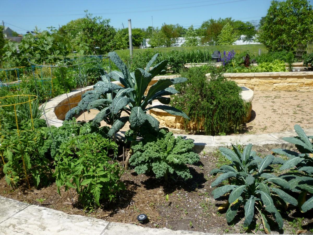 View of Raised Garden Beds