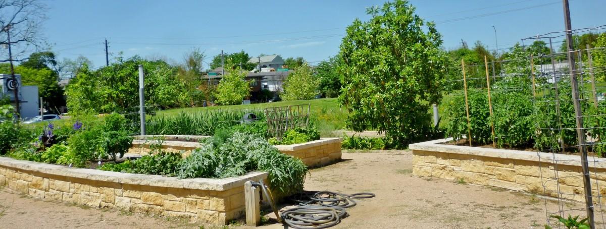 Food is grown in Mandell Park