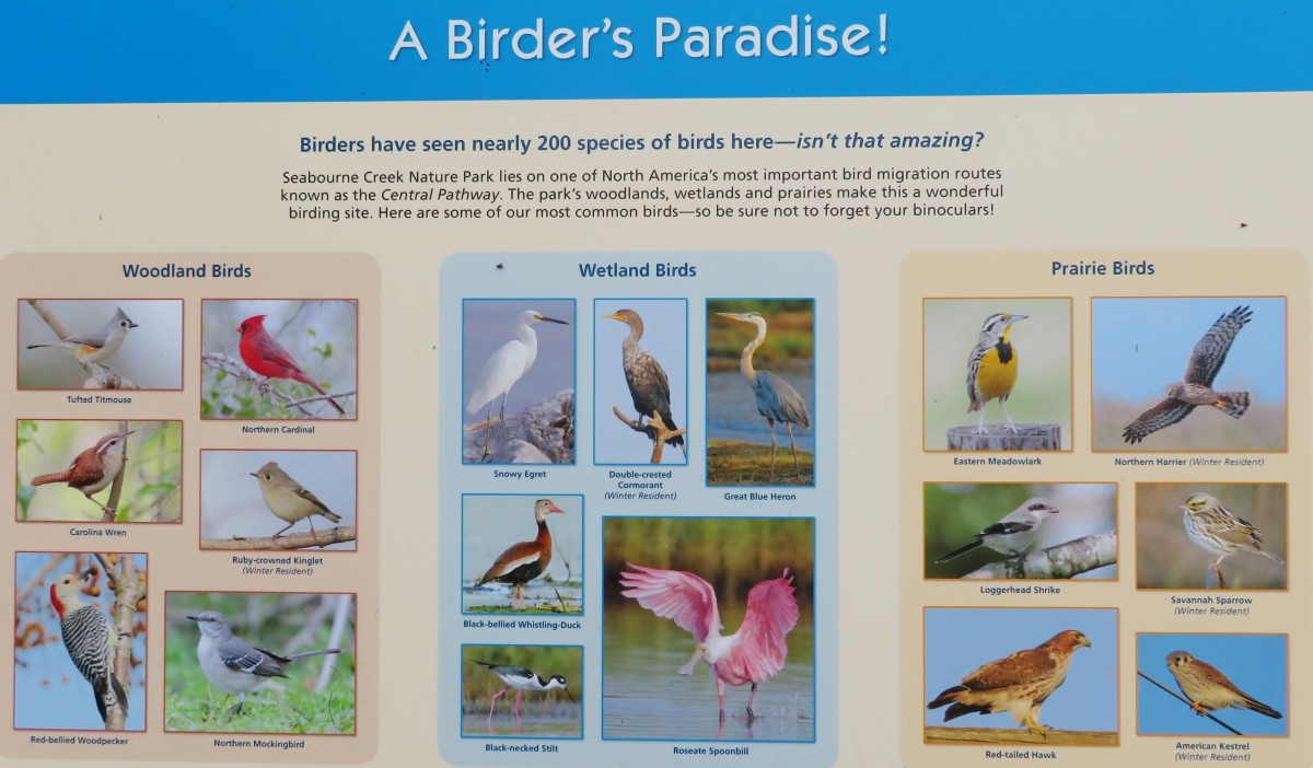 Sign about the birds found here