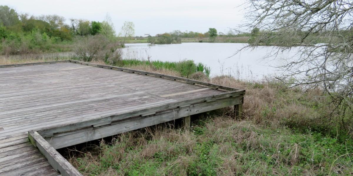 Raised wooden walkway in the wetlands area