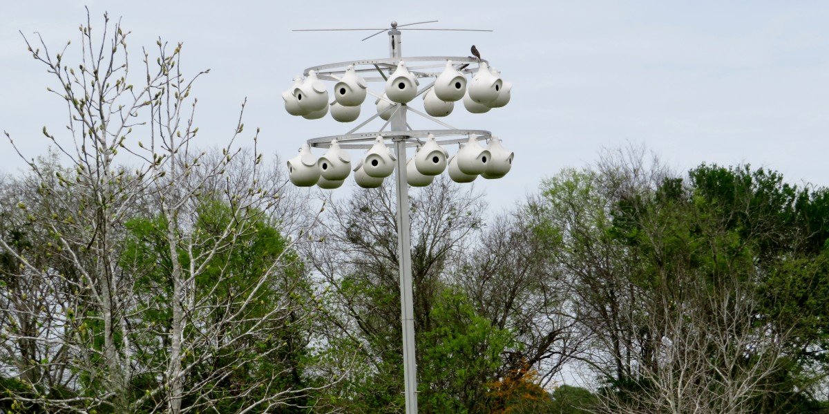 Many different birdhouses are in Seabourne Creek Nature Park. We had never seen one quite like this!