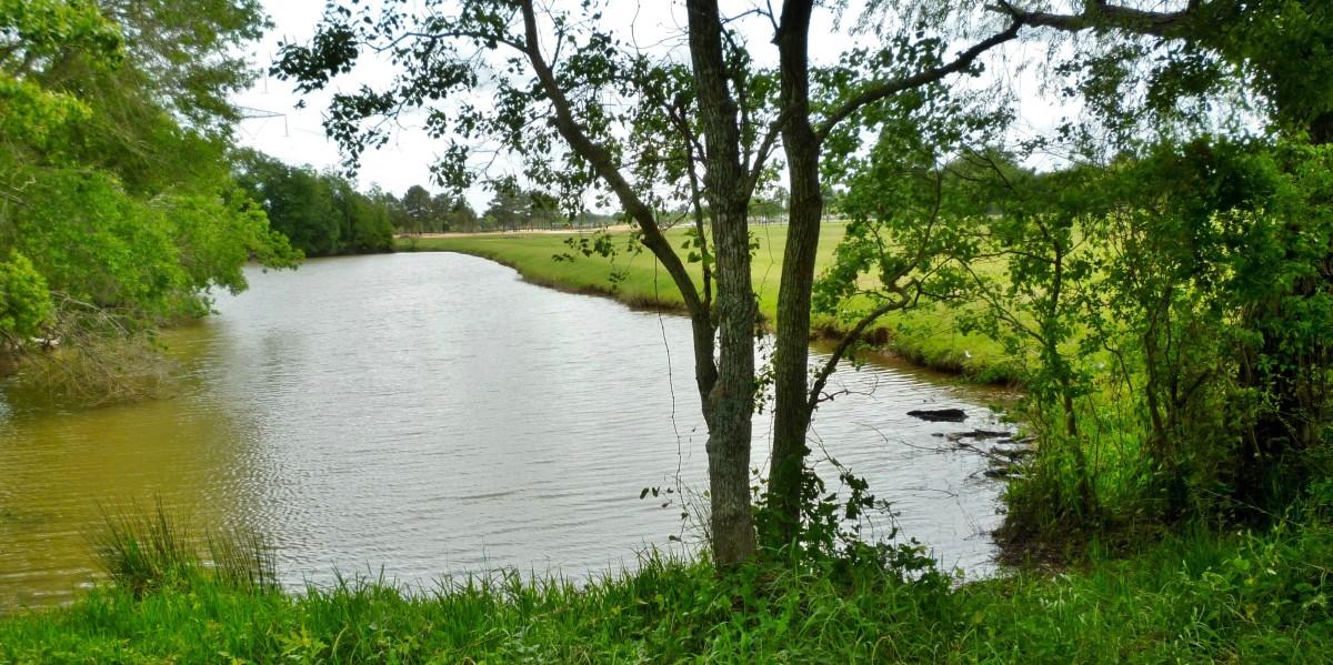 Pond in Zube Park