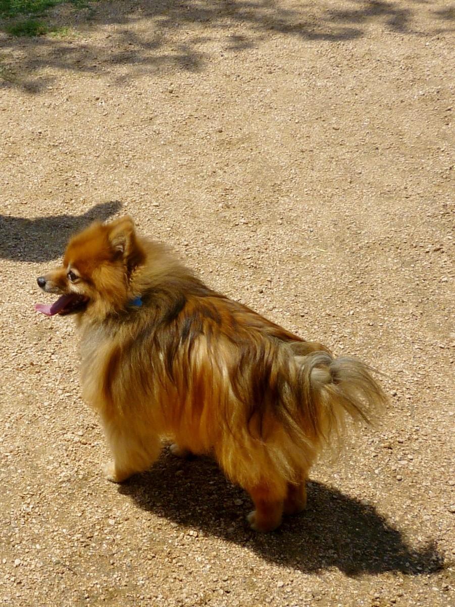 Skippy in Congressman Bill Archer Park