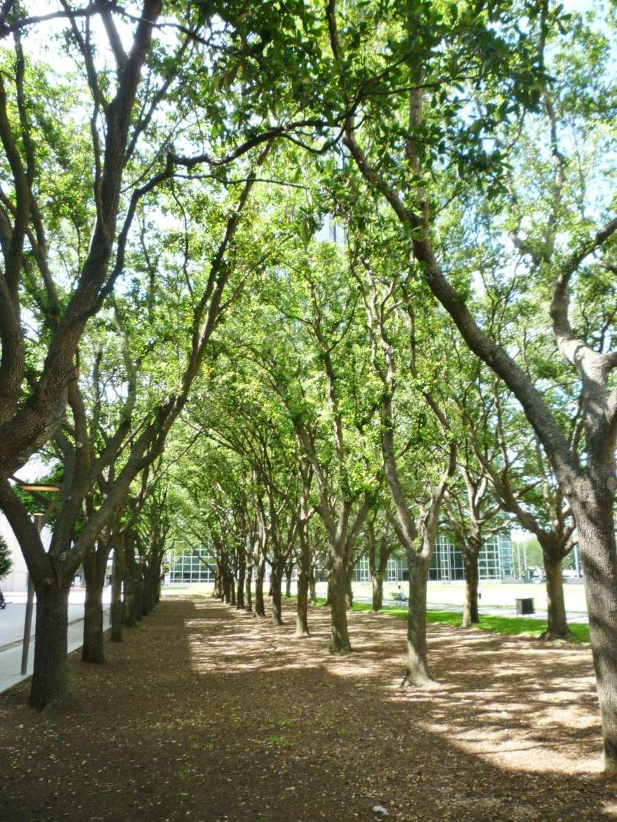 Trees in Gerald D. Hines Waterwall Park