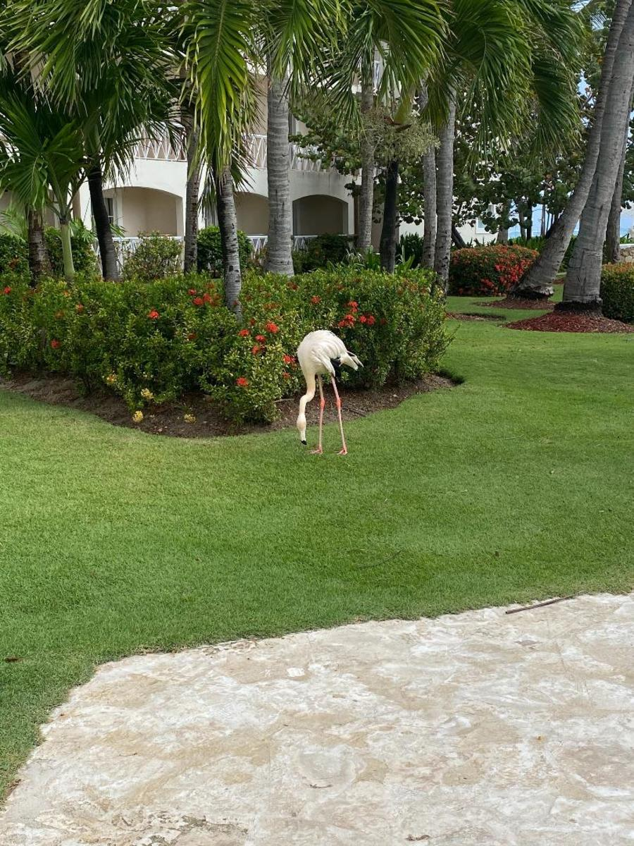 The resident flamingo who lived right by the pool.