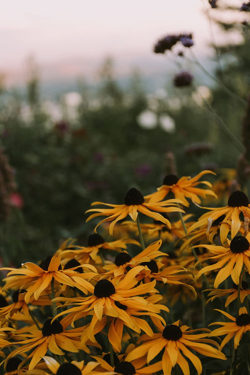 Pittock gardens