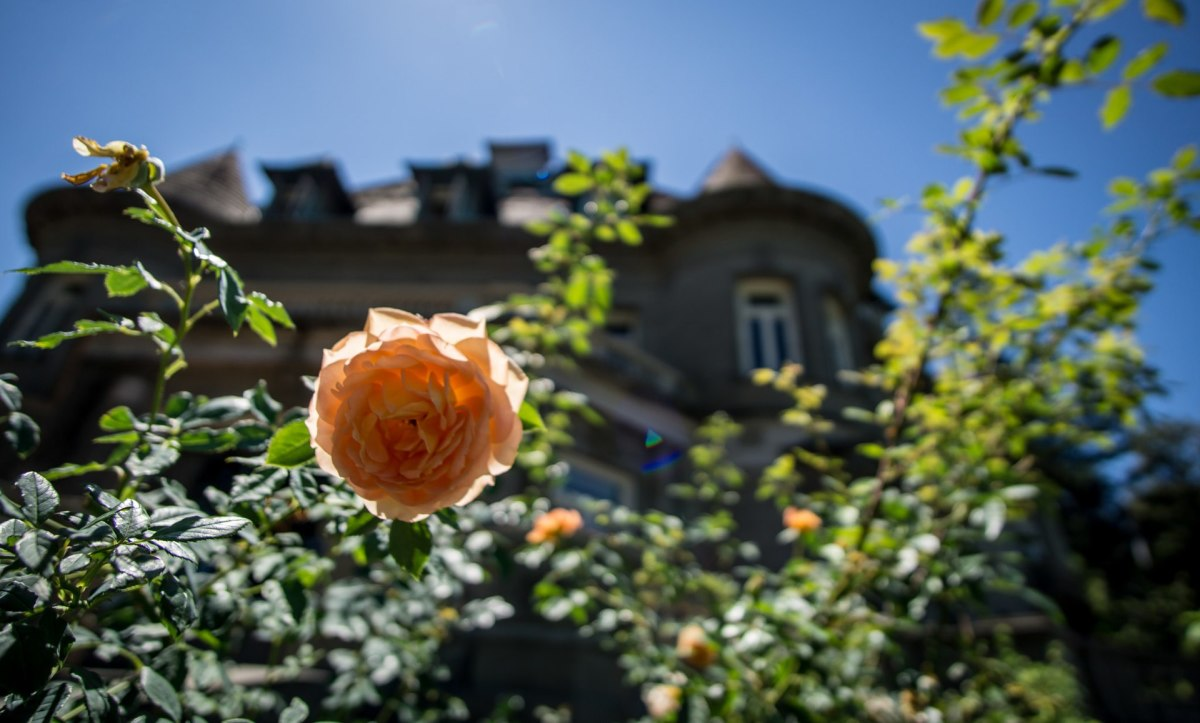 Gardens in the Pittock Mansion