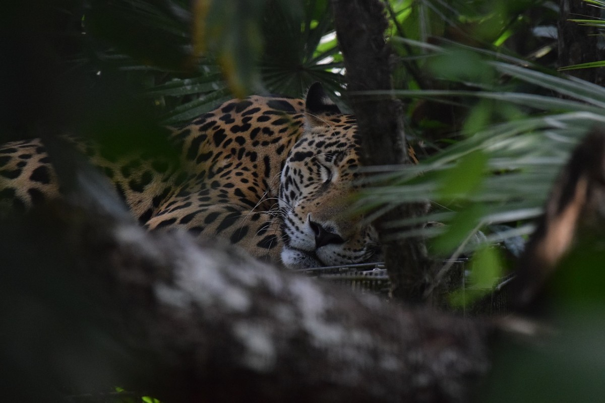 Bolivia's jungles are home to an incredible diversity of wildlife.