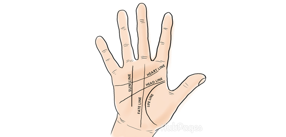 In palmistry, or palm reading, five of the major lines are the heart line, the head line, the life line, the fate line, and the sun line.