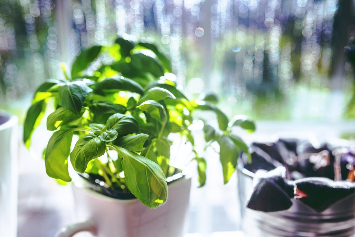 Herbs like Basil are ideal for the Kitchen Garden while plants like Cactus are not.