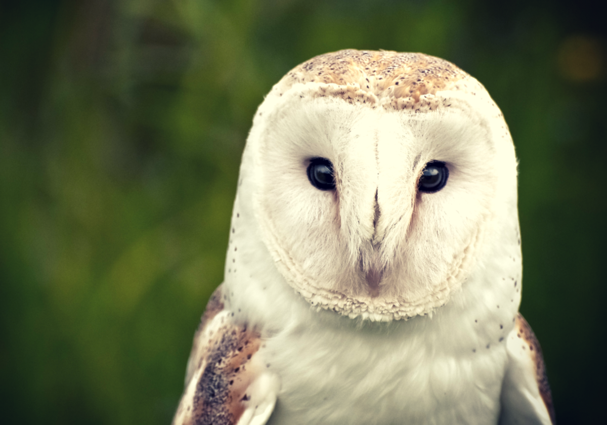 Owls have played important roles in many myths and superstitions since ancient times.