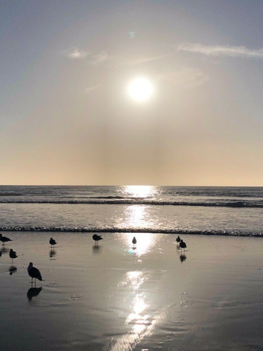 Moonlight State Beach is a special place.