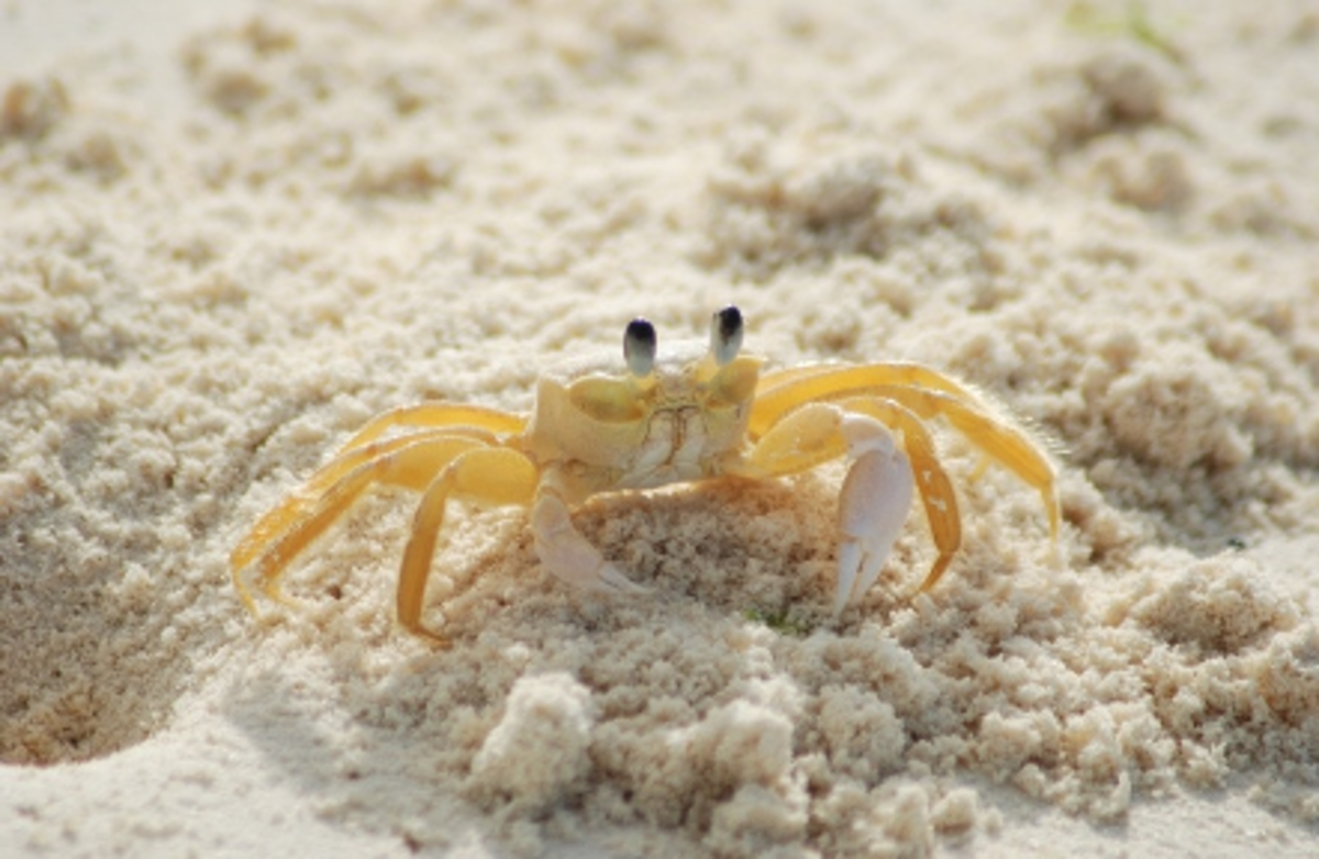 The crab symbolizes Cancer.