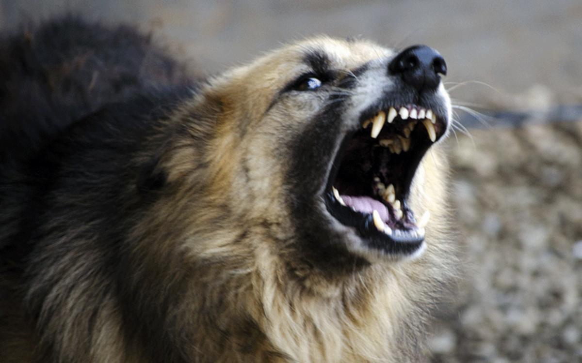 All mammals use their teeth to survive.
