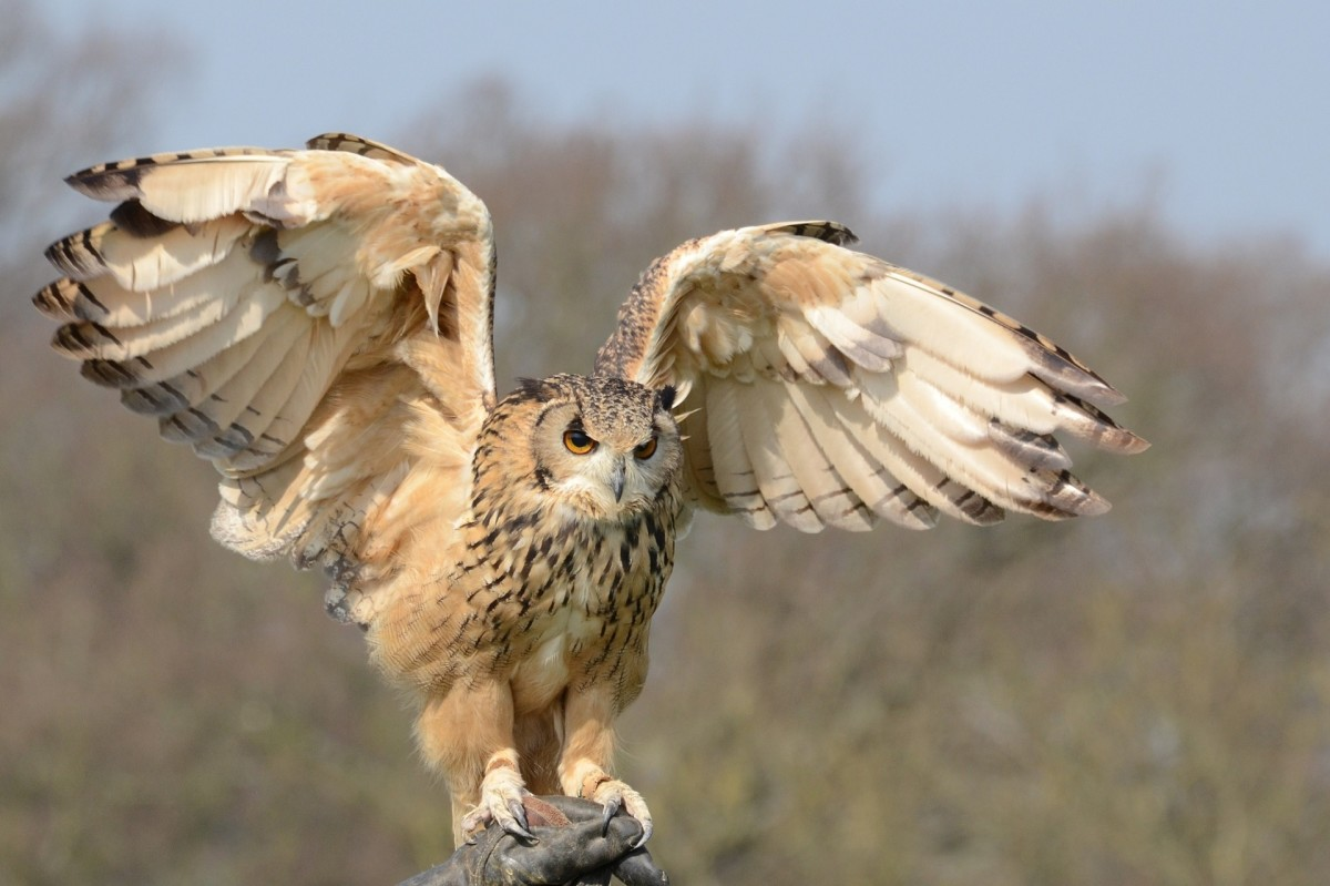 Owls teach us to embrace the dark and learn that it isn't something fearful or evil.