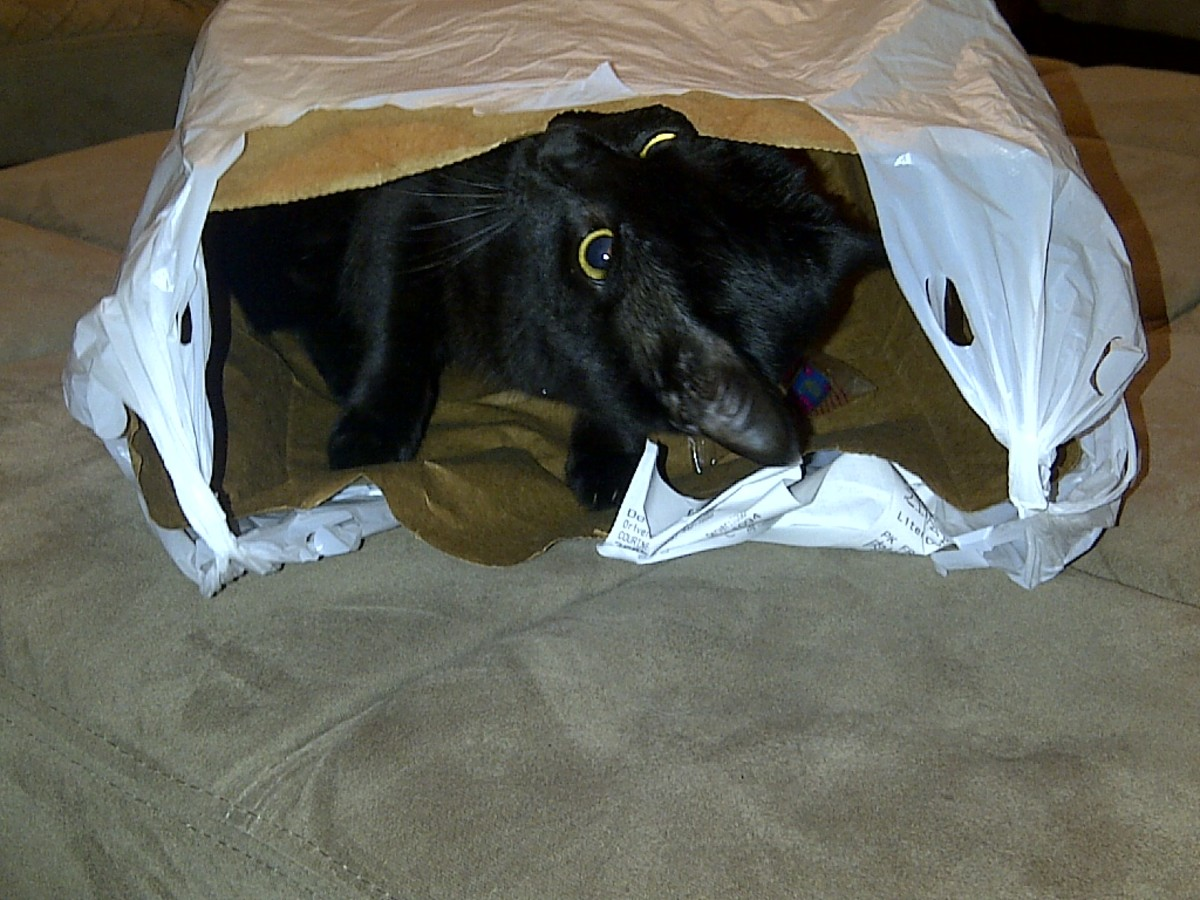 Boo Bear playing in a bag.